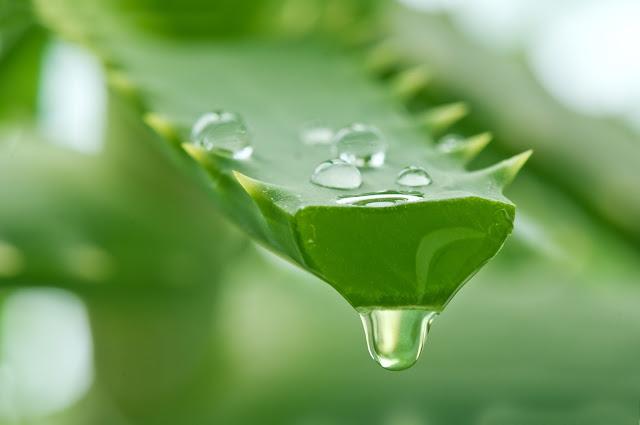 Aloe-vera-for-skin